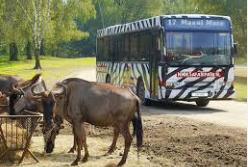 beekse-bergen-toeetje-met-de-safaribus