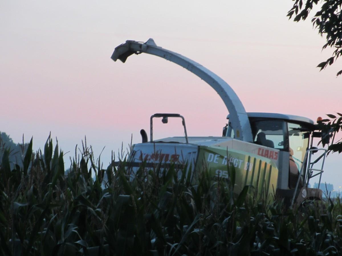 ET oogst de mais